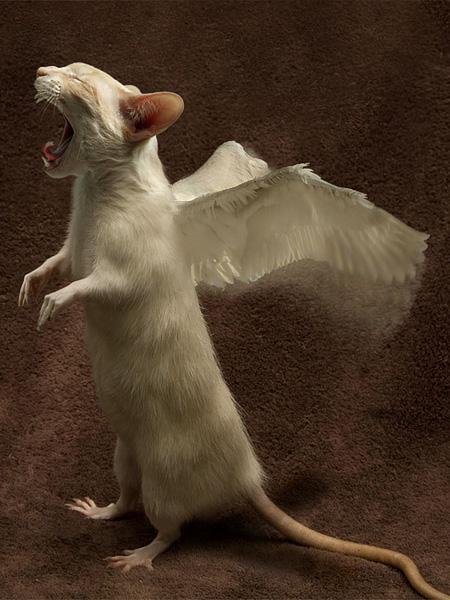 Ratcat Has Wings